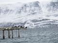 Batsfjord 2016